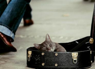 Kotek na ulicy
